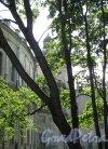Красноармейский пр. (Гатчина), д. 1. Дворец. Фрагмент садового фасада. Фото август 2013 г.